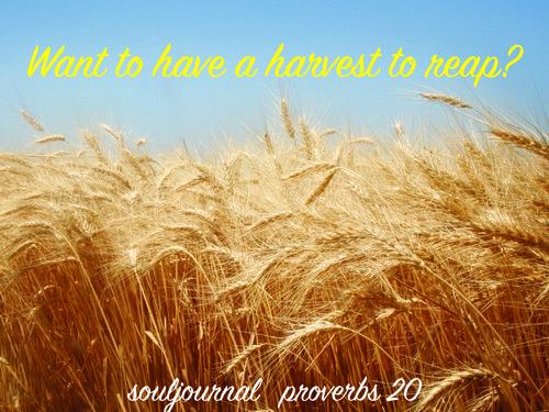 Harvest-01